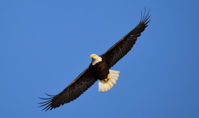 Last Good Weekend for Eagle Watching